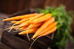 Frische organische Karotte Stockfoto