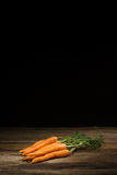 Frische organische Karotten Stockfotografie