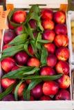 Frische organische Nektarine-Früchte Feldzusammensetzung von Früchten an Stockbilder