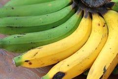 Frische organische reife Bananen und rohe Bananen in einem Bananenbündel auf einem hölzernen Picknicktisch Stockbild