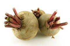 Frische organische Rote-Bete-Wurzeln Lizenzfreies Stockfoto