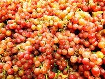 Frische organische rote Trauben Stockfotografie