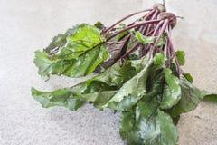 Frische organische Zuckerrübe lizenzfreies stockfoto