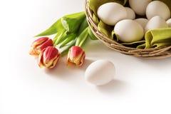 Frische Ostereier in einem Korb und rote Tulpen als Feiertagsecke Stockfotografie