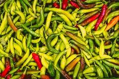 Frische Pfeffer der grünen und roten Paprikas vom Valencian Obstgarten stockfotos