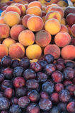 Frische Pfirsiche und Pflaumen Stockfotos