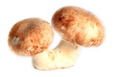 Frische Pilze Lizenzfreie Stockfotos