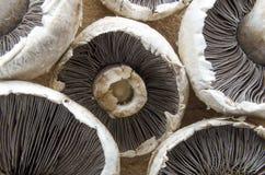 Frische Pilze Stockbilder