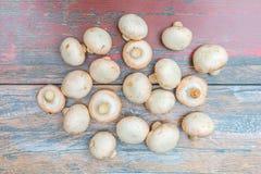 Frische Pilze stockfotografie