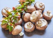 Frische Pilze bereit zum Kochen Konzept - gesundes Lebensmittel Lizenzfreie Stockfotos