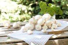 Frische Pilze mit Petersilie Stockbild