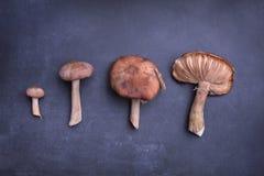 Frische Pilze organisch Stockbild