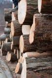 Frische Protokolle des Holzes oben angehäuft Lizenzfreies Stockfoto