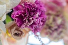 Frische purpurrote Gartennelke der Nahaufnahme und rosafarbene Blume auf unscharfem Hintergrund Ereignisdekoration mit frischen B lizenzfreies stockfoto