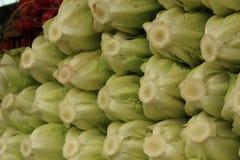 Frische Römersalate Stockfoto