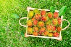 Frische Rambutans in der Holzkiste Tropische Frucht der Sommersaison stockfoto