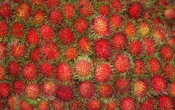 Frische Rambutans am Markt Stockbilder