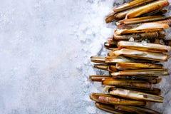 Frische Rasiermessermuscheln auf Eis, grauer konkreter Hintergrund Kopieren Sie Raum, Draufsicht Lizenzfreies Stockfoto