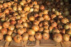 Frische reife gelbe Zwiebel werden auf rauer verwitterter Holzoberfläche getrocknet Natürlicher organischer Hintergrund Ländliche lizenzfreies stockbild