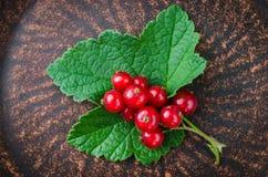Frische reife organische rote Johannisbeere in der Platte Stockbild