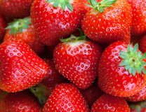 Frische reife perfekte Erdbeere, Lebensmittel-Feld-Hintergrund Stockfotos