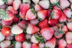 Frische reife perfekte Erdbeere - Lebensmittel-Feld-Hintergrund lizenzfreie stockfotografie