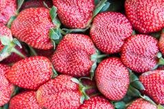 Frische reife perfekte Erdbeere - Lebensmittel-Feld-Hintergrund stockfoto