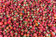Frische reife perfekte Erdbeere - Lebensmittel-Feld-Hintergrund Stockfotografie