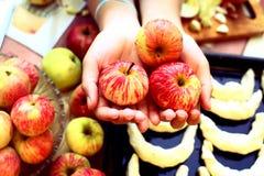 Frische reife Äpfel in den Händen mit Hörnchen auf dem Hintergrund Lizenzfreie Stockfotos