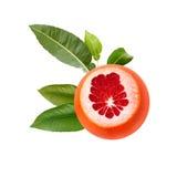 Frische reife rote Pampelmuse mit grünen Blättern Rot schnitt die lokalisierte Zitrusfrucht Stockbilder