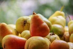 Frische reife, saftige, rote und gelbe Birnen Stockbild