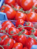 Frische reife Tomaten Stockfotos