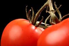 Frische reife Tomaten, die von oben genanntem auf Schwarzem hängen Lizenzfreies Stockbild