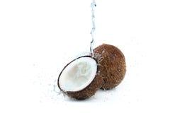 Frische reife tropische Kokosnüsse mit Wasser lokalisiert auf Weiß Stockbilder