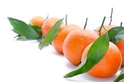Frische, reife Zitrusfrucht, lokalisiert auf weißem Hintergrund Stockbilder