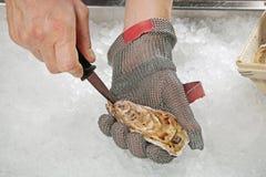 Frische rohe Auster Stockfoto