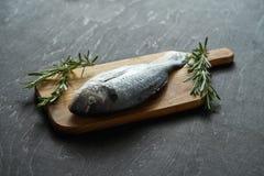 Frische rohe dorada Fische mit Rosmarin, Pfeffer und Salz auf einem hölzernen Brett und einer schwarzen Tabelle lizenzfreie stockbilder