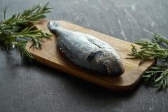 Frische rohe dorada Fische mit Rosmarin, Pfeffer und Salz auf einem hölzernen Brett und einer schwarzen Tabelle stockbilder