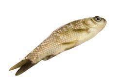 Frische rohe Fische Stockfoto