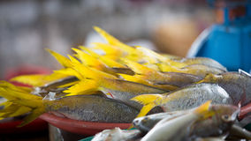 Frische rohe Fische mit gelben Endstücken Lizenzfreie Stockfotografie