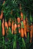 Frische rohe Karotten Stockbild