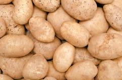 Frische rohe Kartoffeln Stockbilder