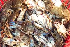 Frische rohe Krabben im Fischmarkt Stockbild