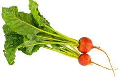 Frische rohe orange Rote-Bete-Wurzeln, rote Rübe Stockfotos