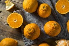 Frische rohe Sumo-Orangen Stockbilder