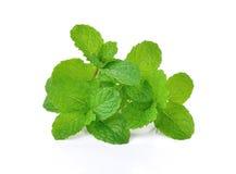 Frische rohe tadellose Blätter lokalisiert auf weißem Hintergrund Stockfoto