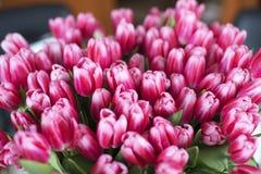 Frische rosa Tulpenblumen-Blumenstraußnahaufnahme lizenzfreie stockfotos