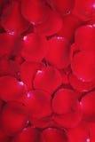 Frische rosafarbene Blumenblätter Lizenzfreie Stockfotografie
