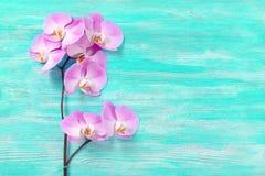 Frische rosafarbene Orchidee blüht den hölzernen Hintergrund der Türkisweinlese Stockfotos