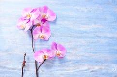 Frische rosafarbene Orchideenblumen und ein kleines Bündel mit der Knospe auf dem hölzernen Hintergrund der blauen Weinlese Stockfotografie